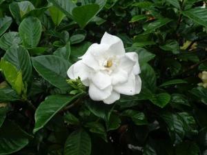 南別館(花) (1).JPG