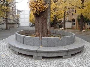 中庭 大イチョウ 椅子.jpg
