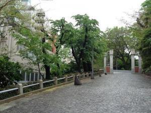 幻門 葉桜 (2).jpg